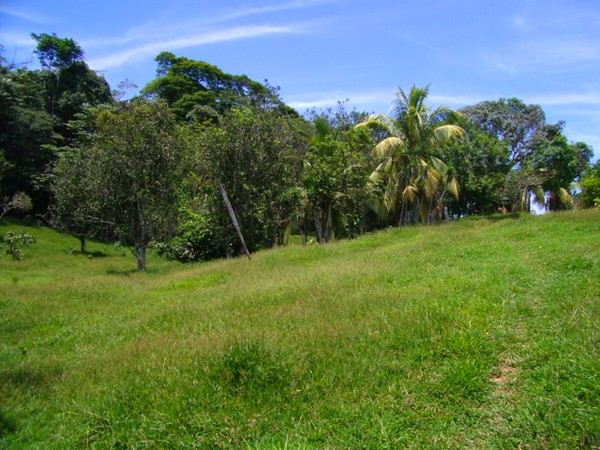 The perfect Caribbean Ranch (65 Ha)