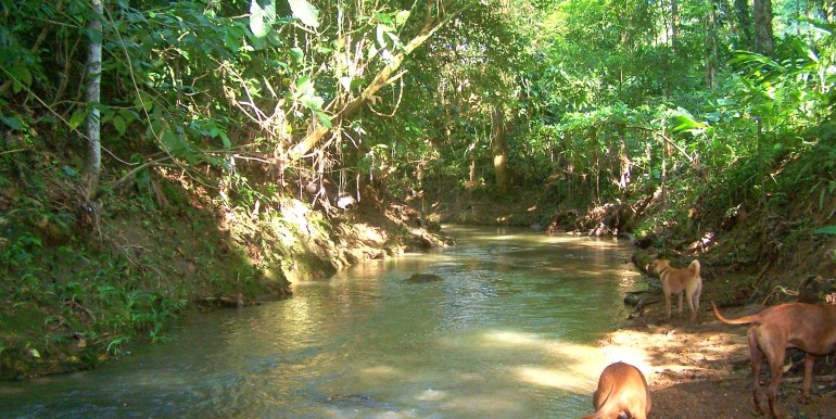 Cano Negro River at the back of property, Cocles, Puerto Viejo, Costa Rica