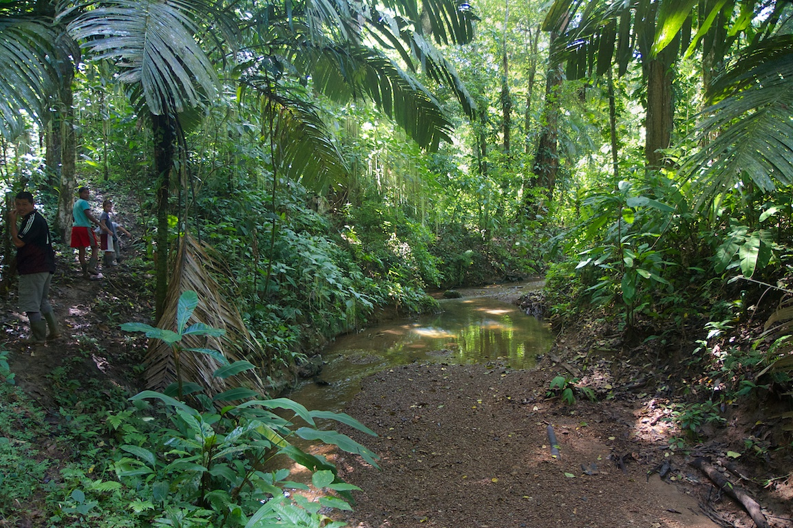 13 Acres of Tropical Paradise in Cocles