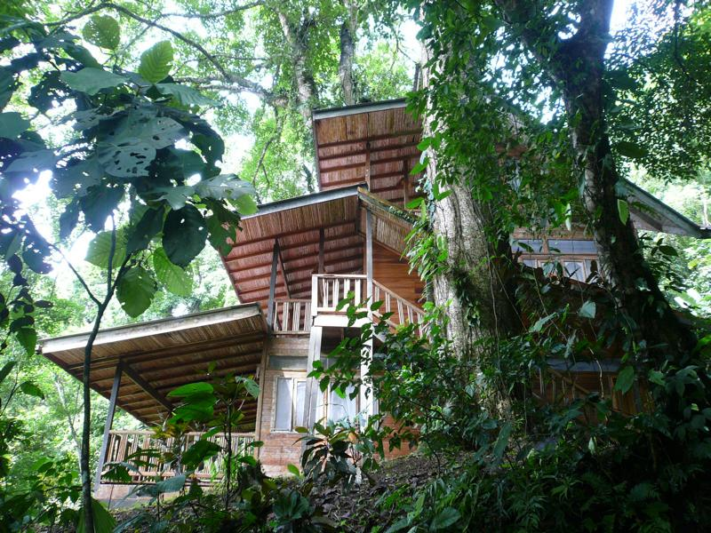House Namaste Between The Trees