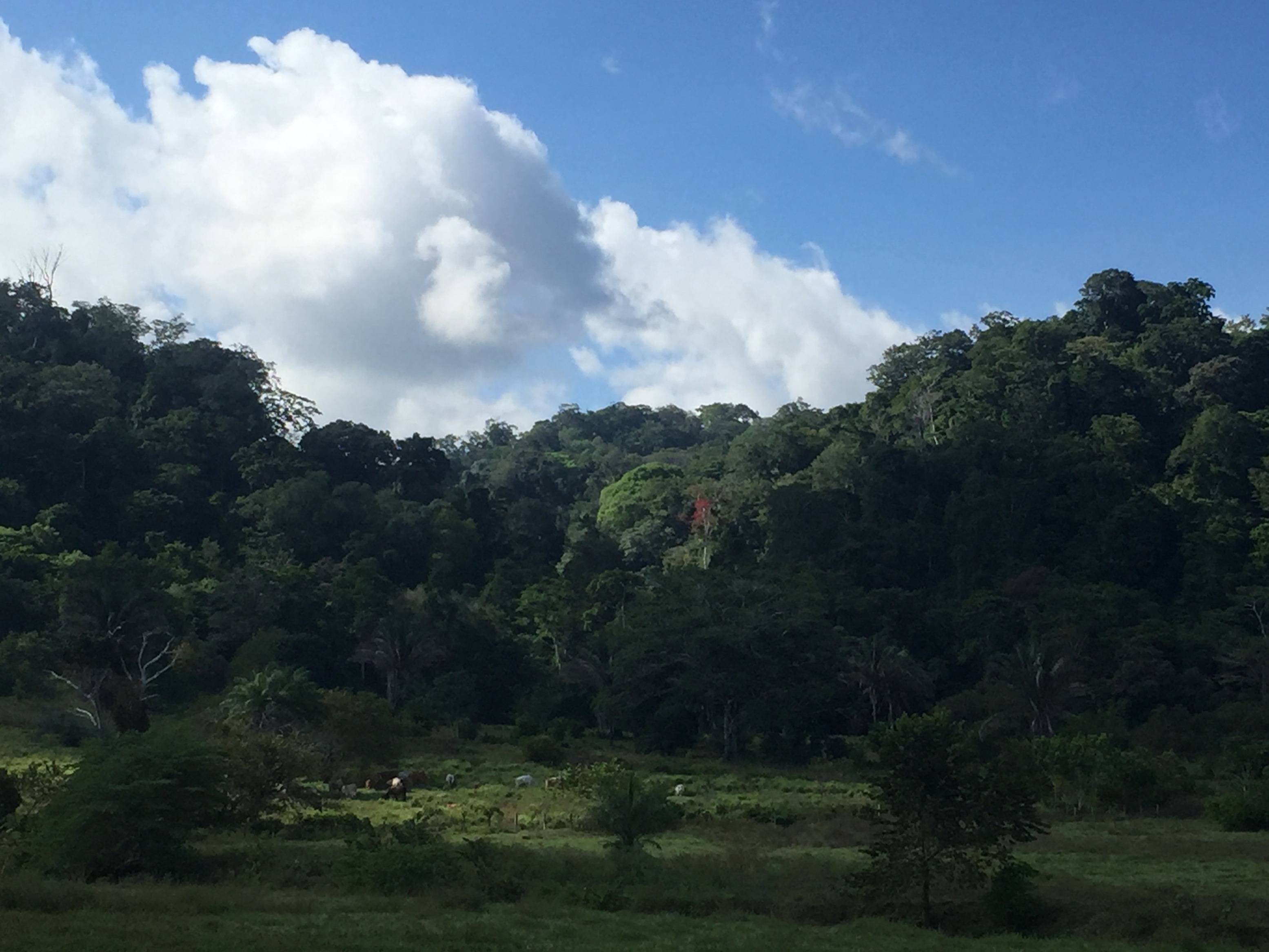 Rancho de los Suenos, near Cahuita National Park!